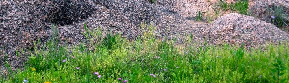 spring 2012 003